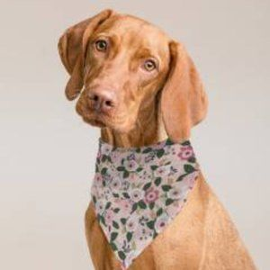 Triangle Bandana For Dog or Cat Pink Blossoms